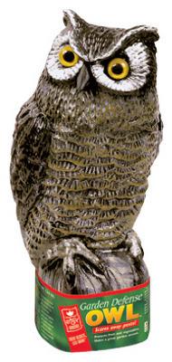 Scarecrow Owl