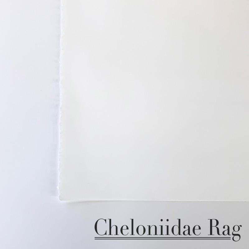 Cheloniidae Rag Paper 22x30 Sheet