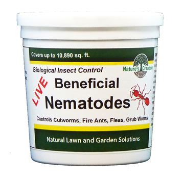 Live Beneficial Nematodes Are Microscopic Non Segmented Worms That In The Soil They Control Over 200 Born Pests Including Cutworms Fire Ants