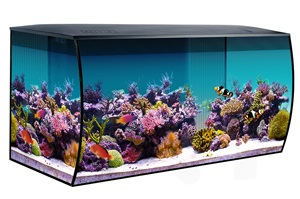 FLUVAL FLEX 32.5 GALLON MARINE SET, BLACK