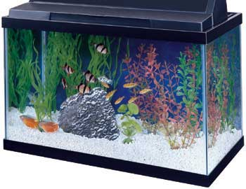 AQUEON 10 GALLON TANK 20x10x12, BLACK