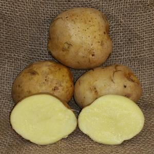 1 lb Yukon Gold Certified Seed Potato