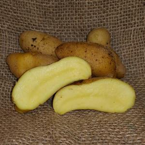 1 lb Austrian Crescent Fingerling Certified Seed Potato