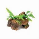 Marina Naturals Malaysian Driftwood w/ Plants - Sm