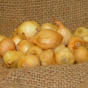 1 lb Yellow Onion Sets