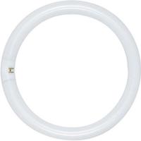 LAMP FL FC6T9/CW CIRCLINE